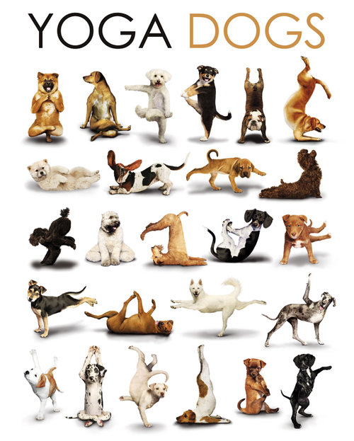 Yoga Dogs Compilation Maxi Poster