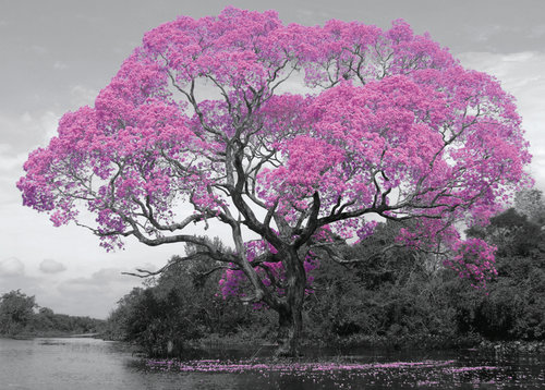 Tree Blossom Giant Poster