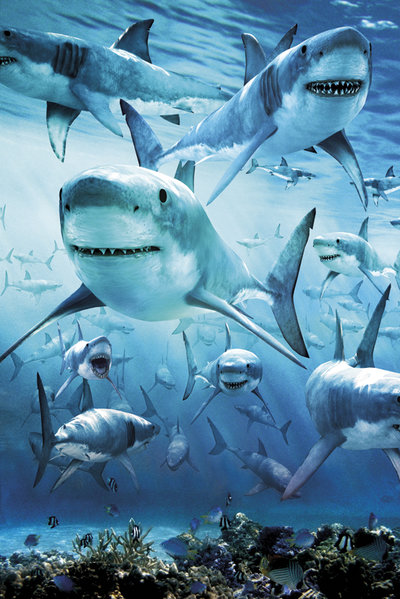 Shark Infested Waters Maxi Poster
